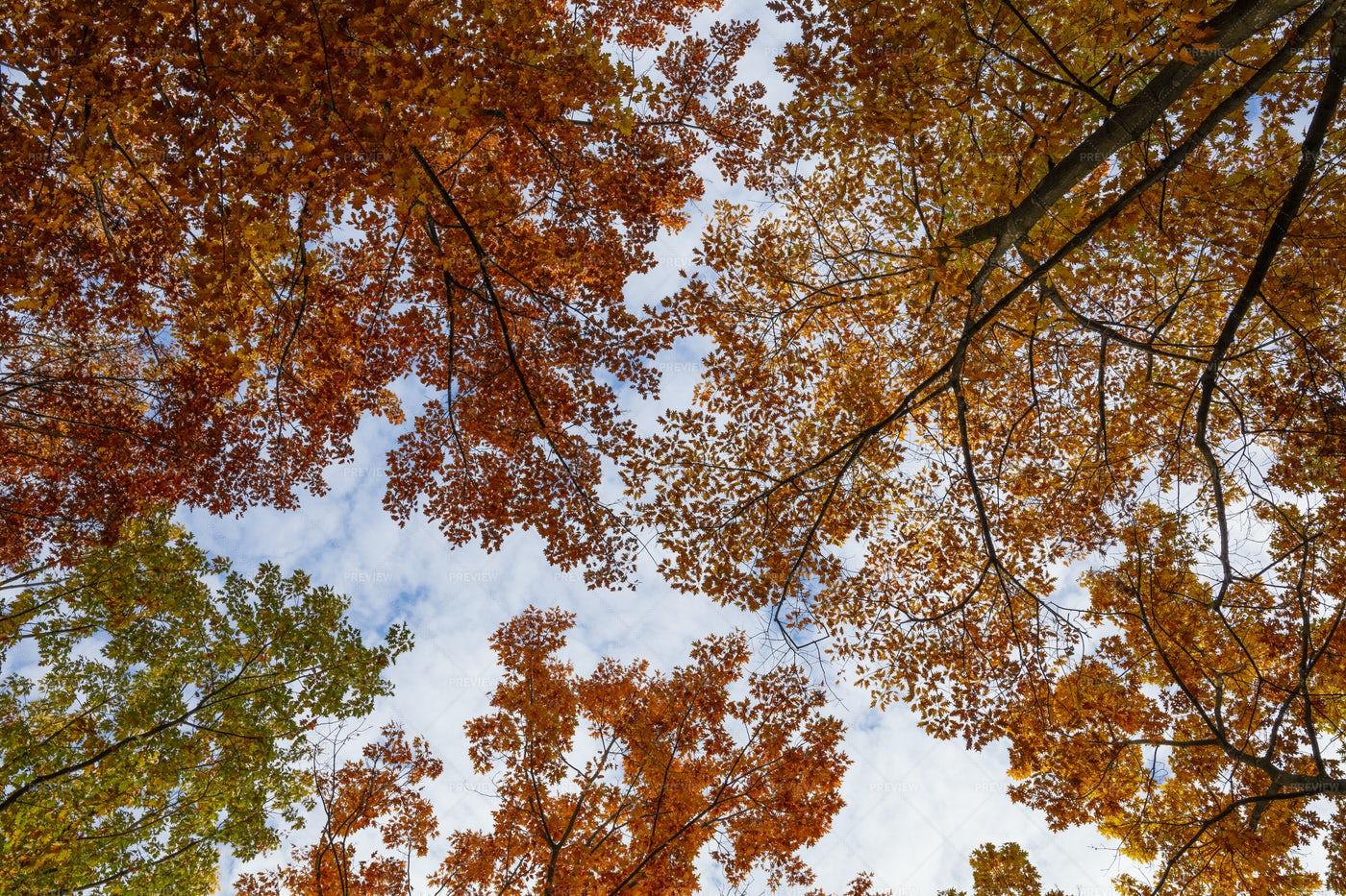 Autumn Trees Perspective: Stock Photos