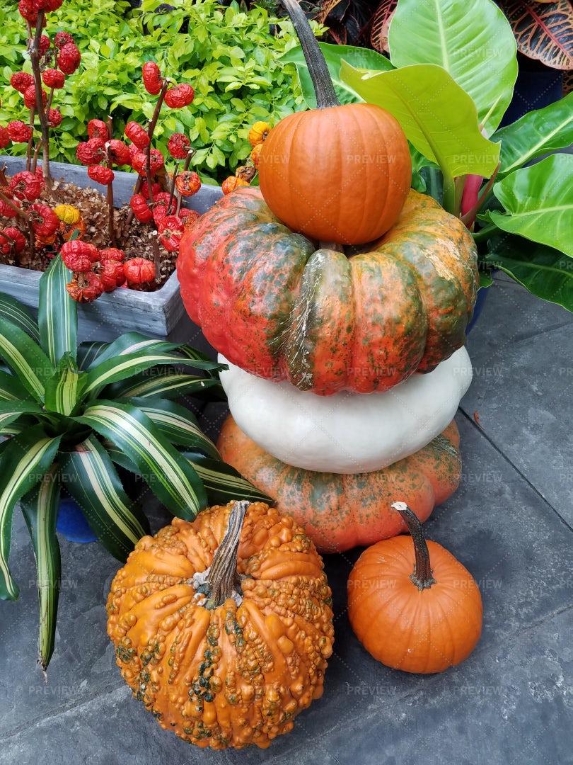 Colorful Pumpkins: Stock Photos