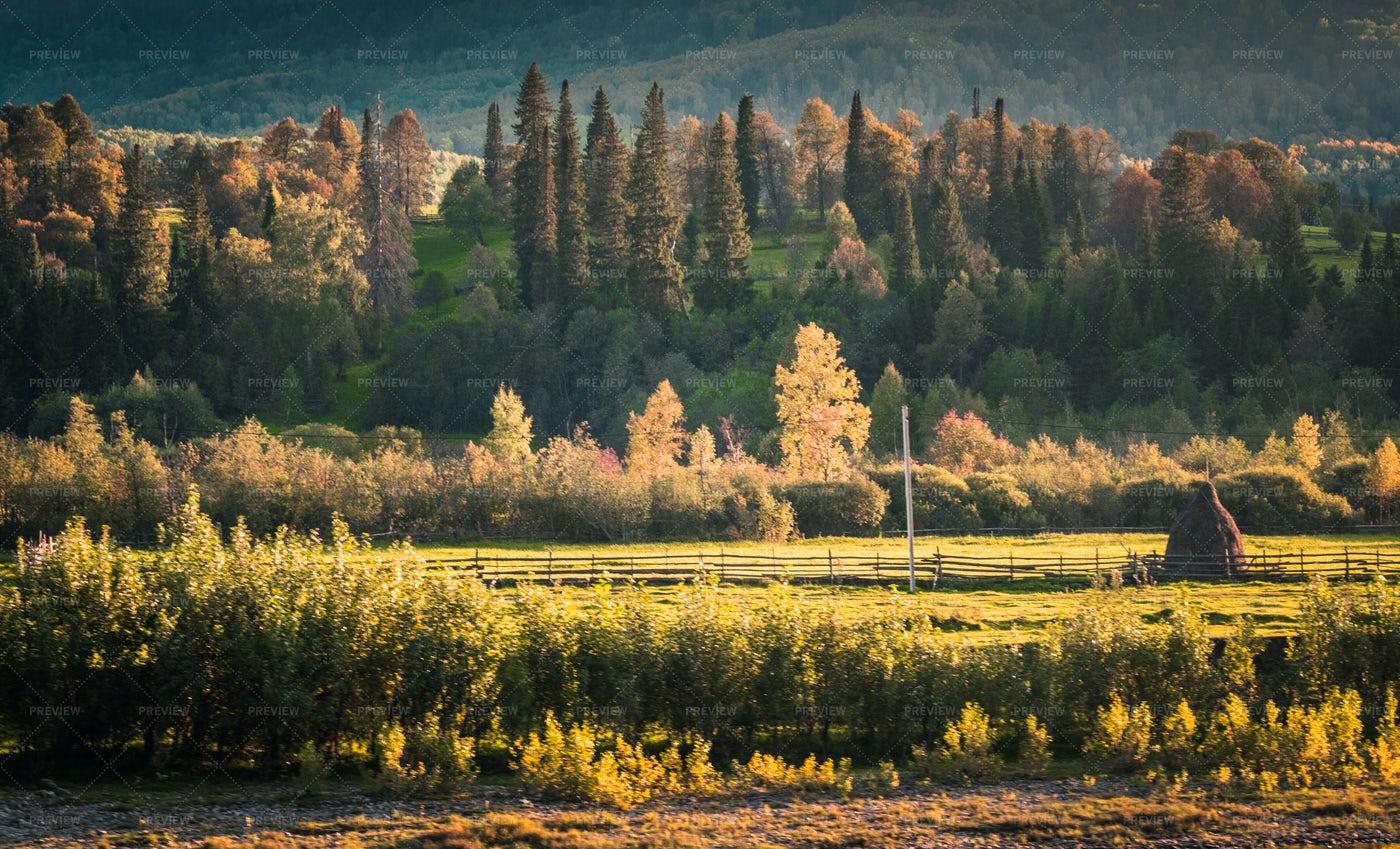 Autumn Village Field Trees: Stock Photos