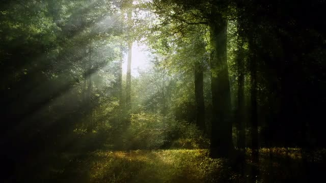 Magical Forest Background Pack: Stock Motion Graphics