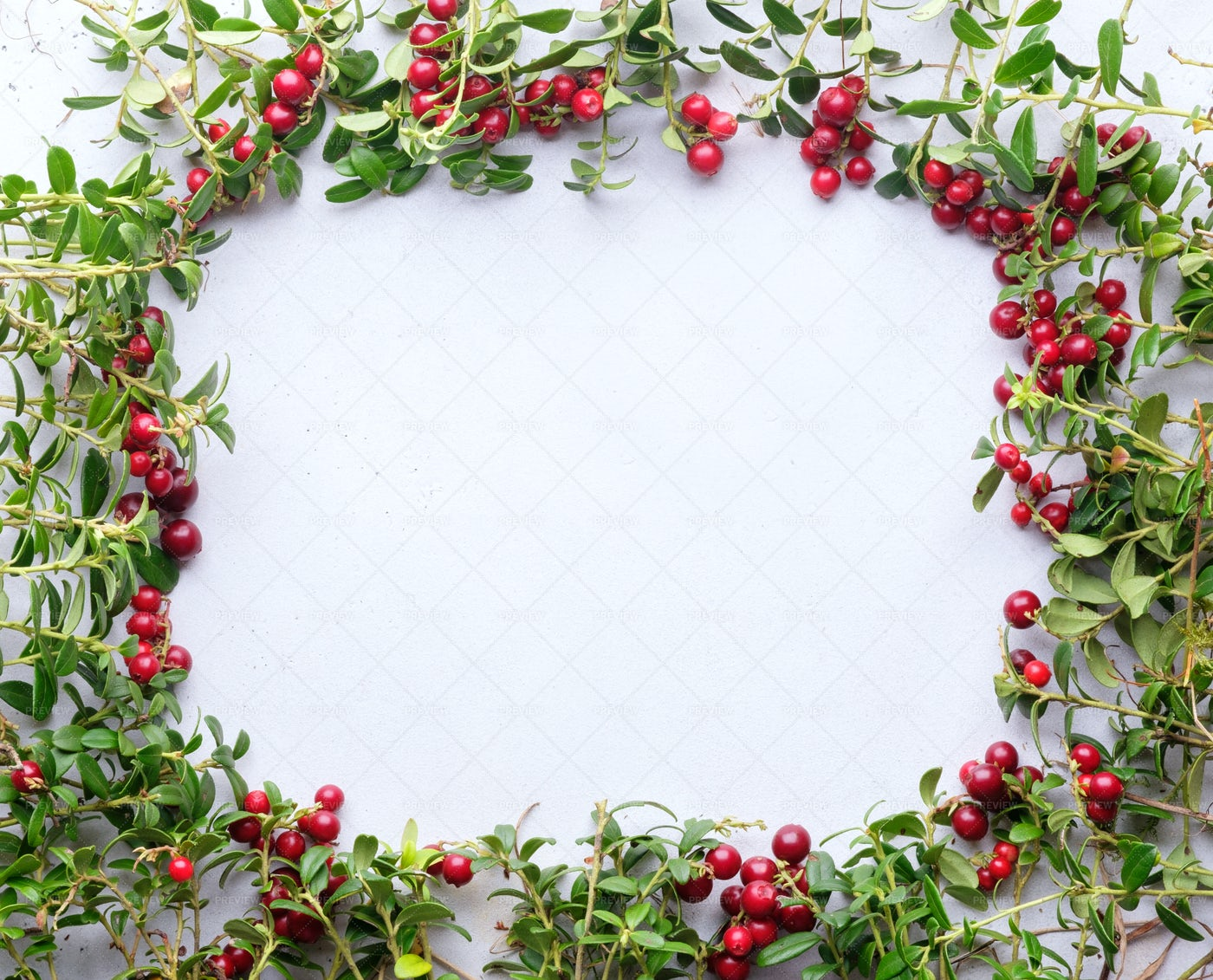 Frame Of Of Lingonberry: Stock Photos