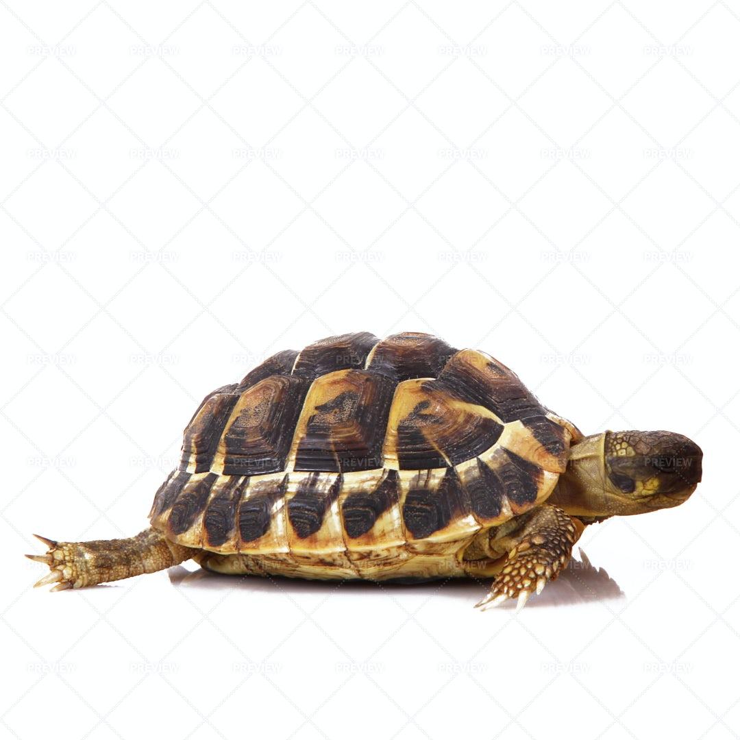 Little Turtle: Stock Photos