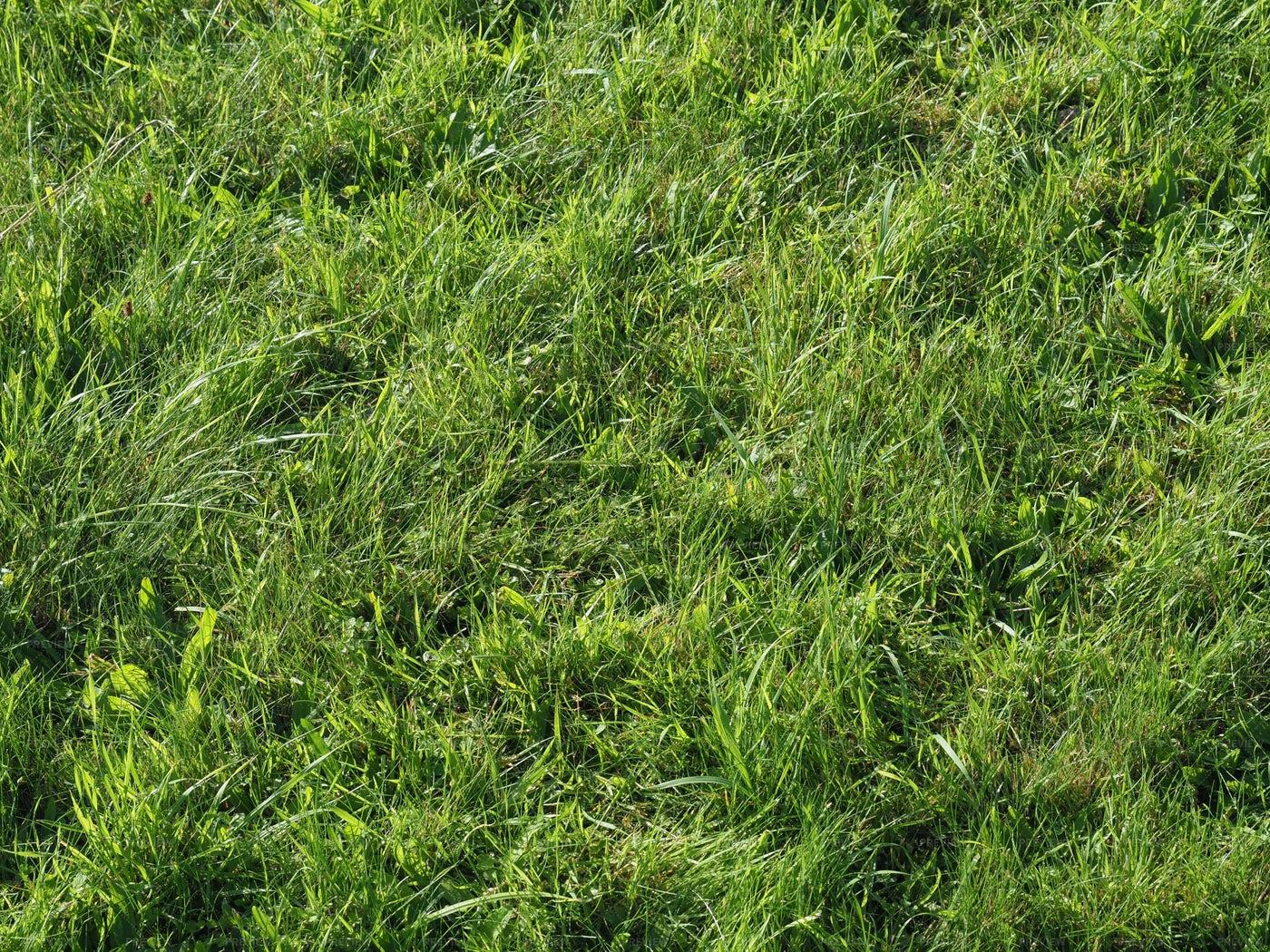 Green Grass Texture Background: Stock Photos