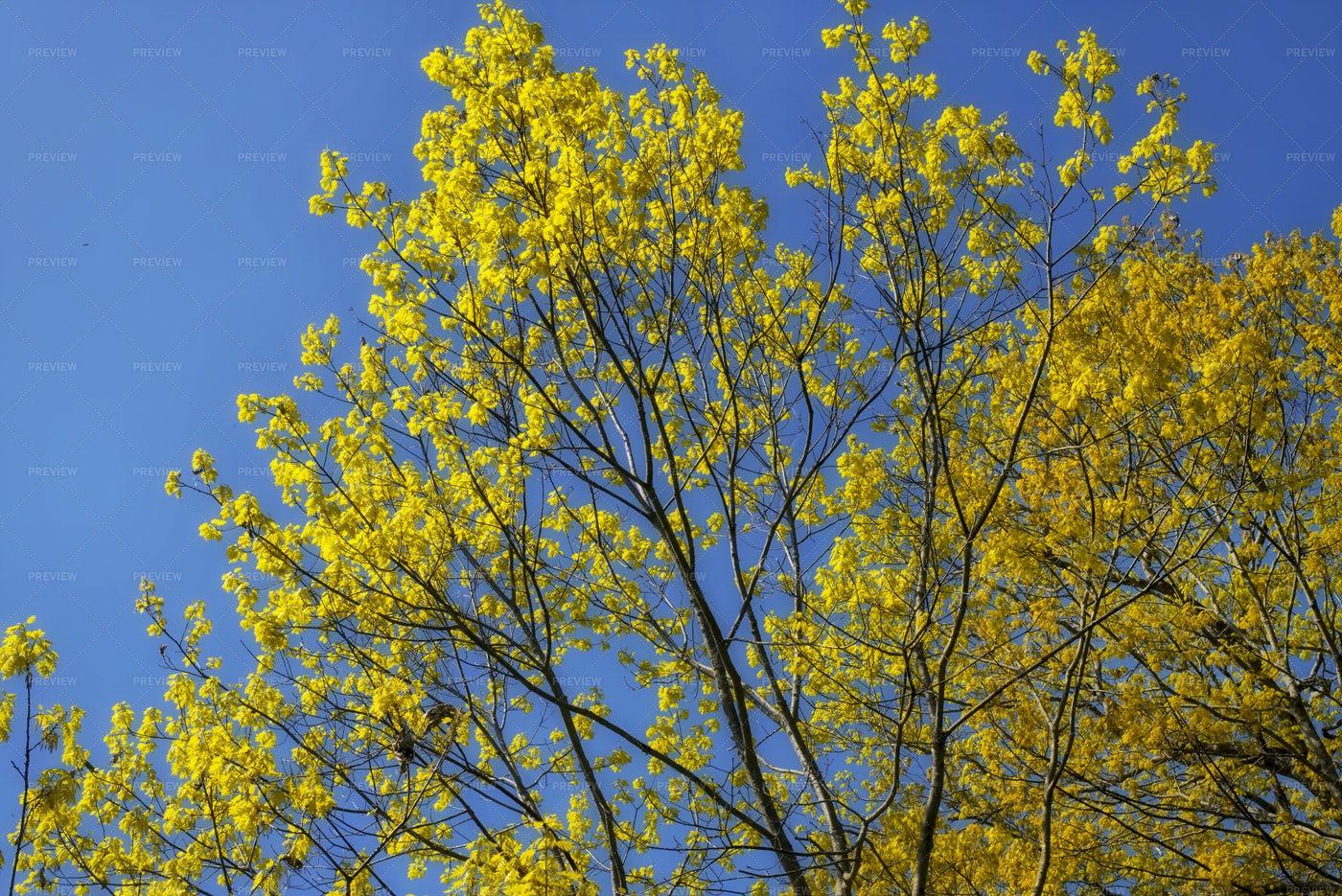 Springtime Trees In Maine: Stock Photos