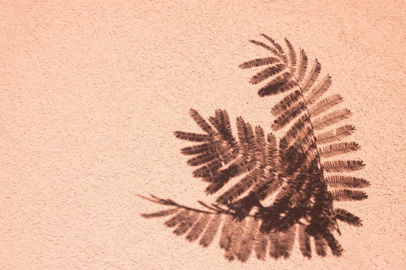 Fern Shadows On Stucco Wall: Stock Photos
