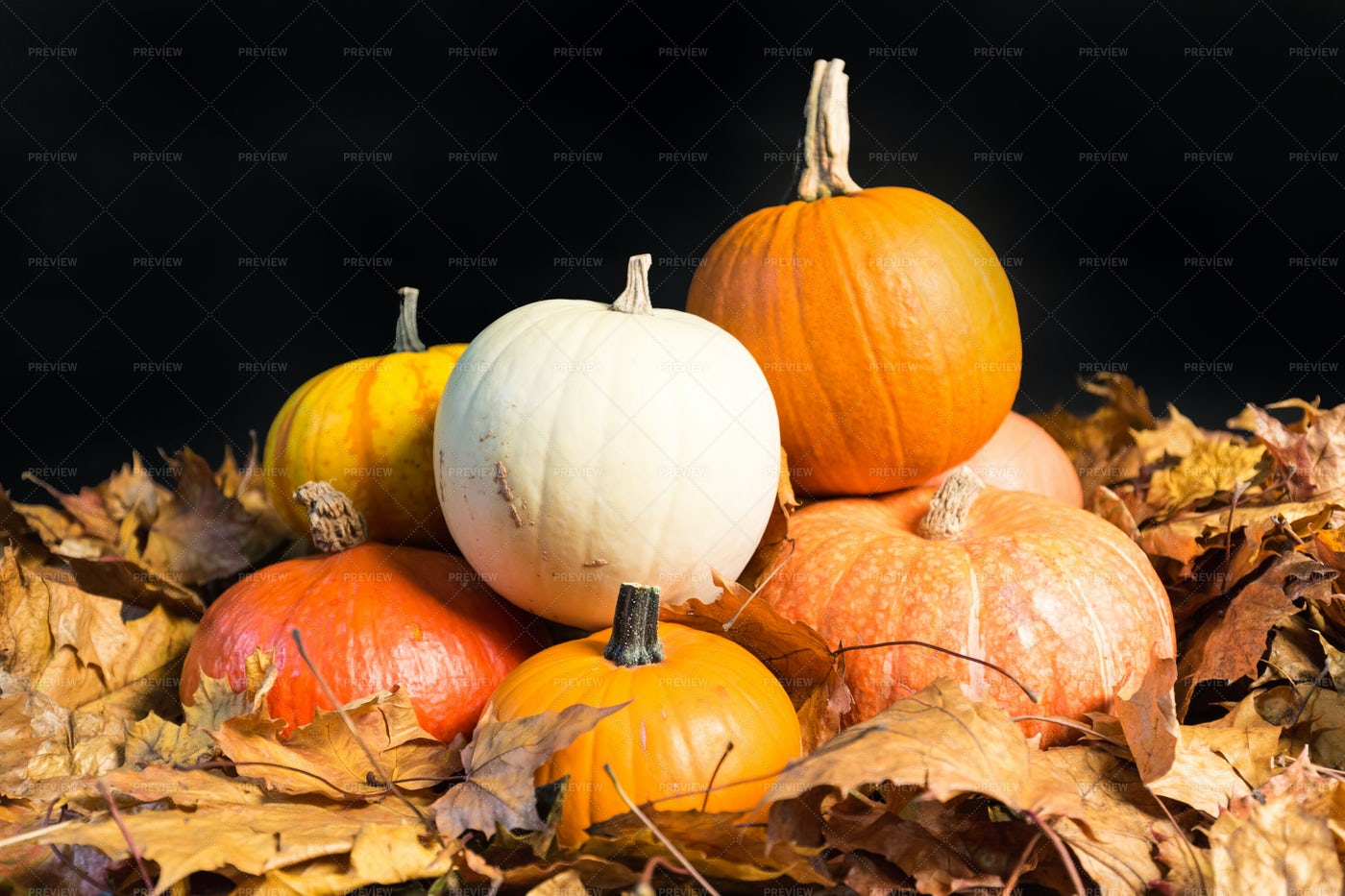 Cucurbit Gourds On Oak Leaves: Stock Photos