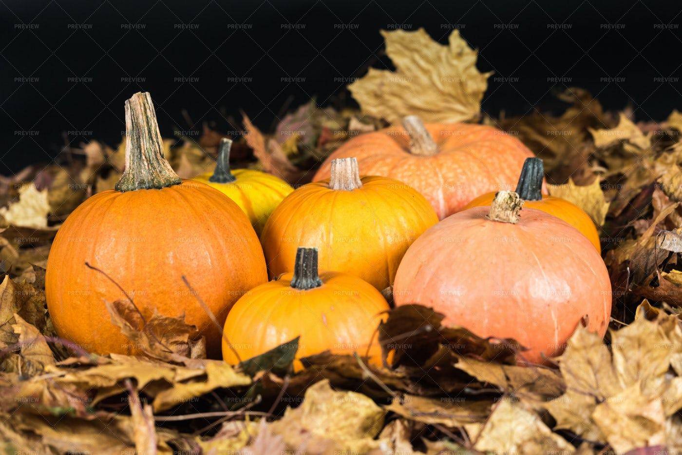 Autumn Pumpkins On Oak Leaves: Stock Photos