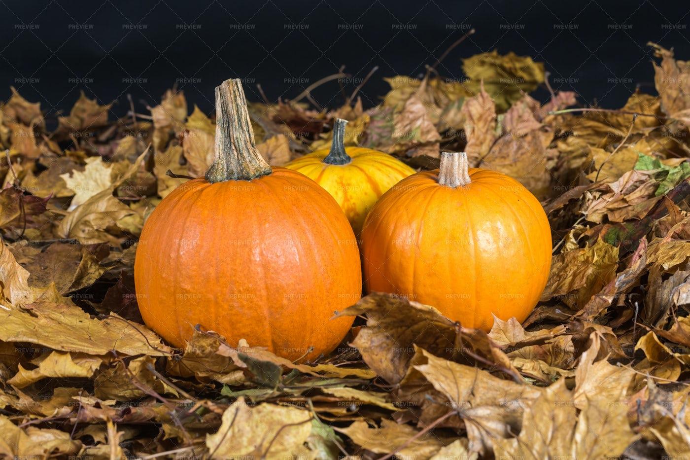 Pumpkins On Oak Leaves: Stock Photos