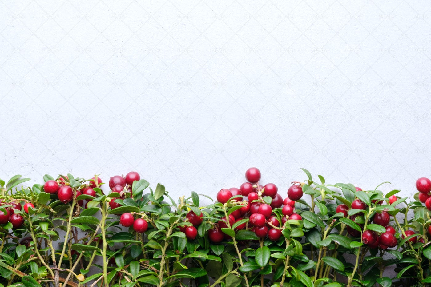 Background With Lingonberry: Stock Photos