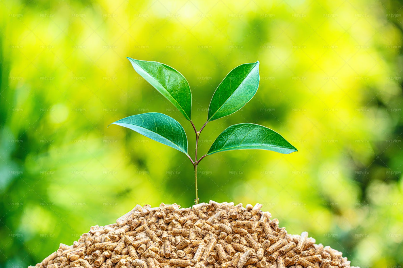 Wood Fuel Pellets And Sprout: Stock Photos