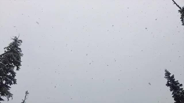 Snow Falling in Slow Motion: Stock Video