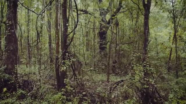 Southern Jungle in Mississippi: Stock Video