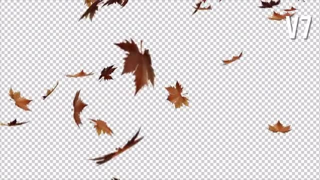 Falling Leaves Pack: Stock Motion Graphics