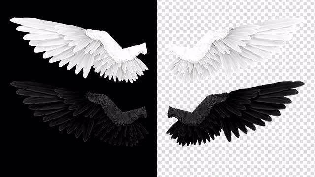 White-Black Angel Wing Sets: Stock Motion Graphics