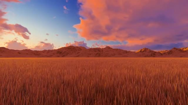 Field Of Grass At Sunrise: Stock Motion Graphics