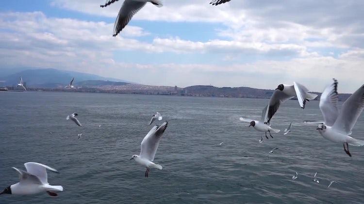 Seagulls Flying The Over Ocean: Stock Video