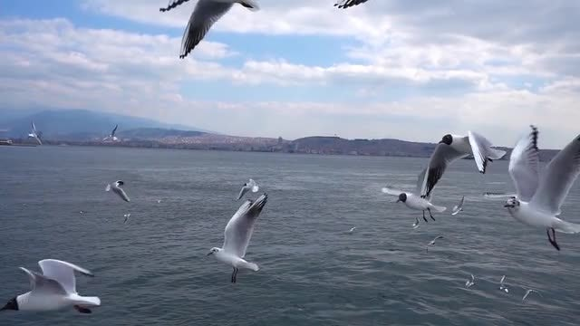 Seagulls Flying The Over Ocean: Stock Video