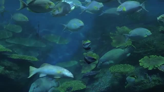 Close Up Shot Of Tropical Fishes : Stock Video