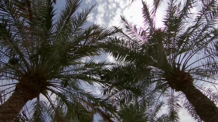 Low Angle Shot Of Palm Trees: Stock Video