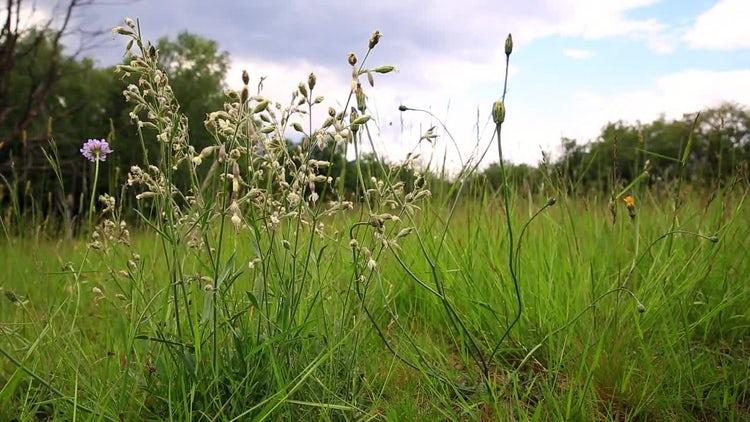 Flower Meadow: Stock Video