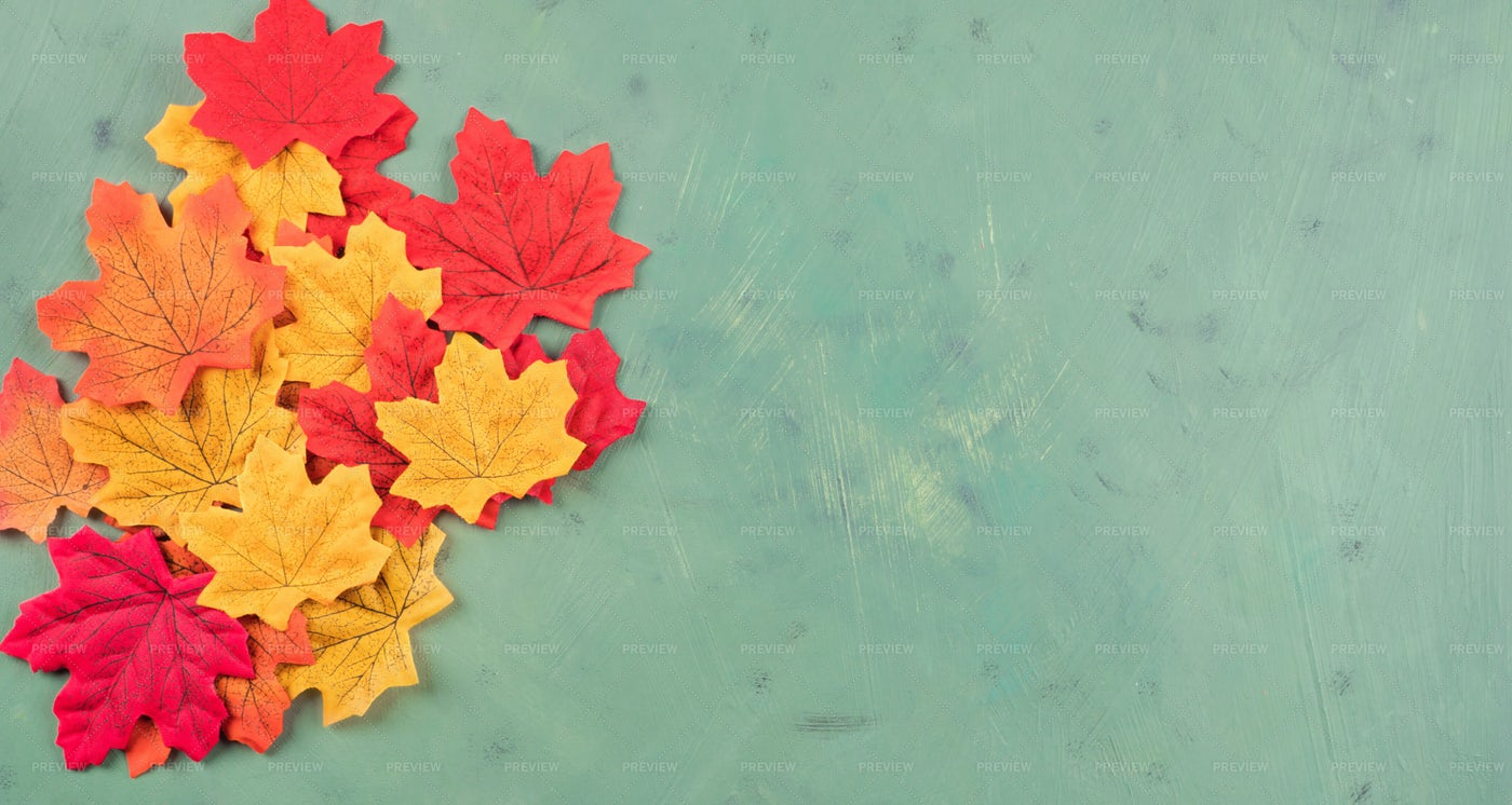 Multicolor Maple Leaves: Stock Photos