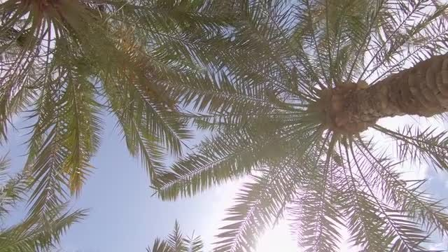Palm Trees Low Angle Shot: Stock Video