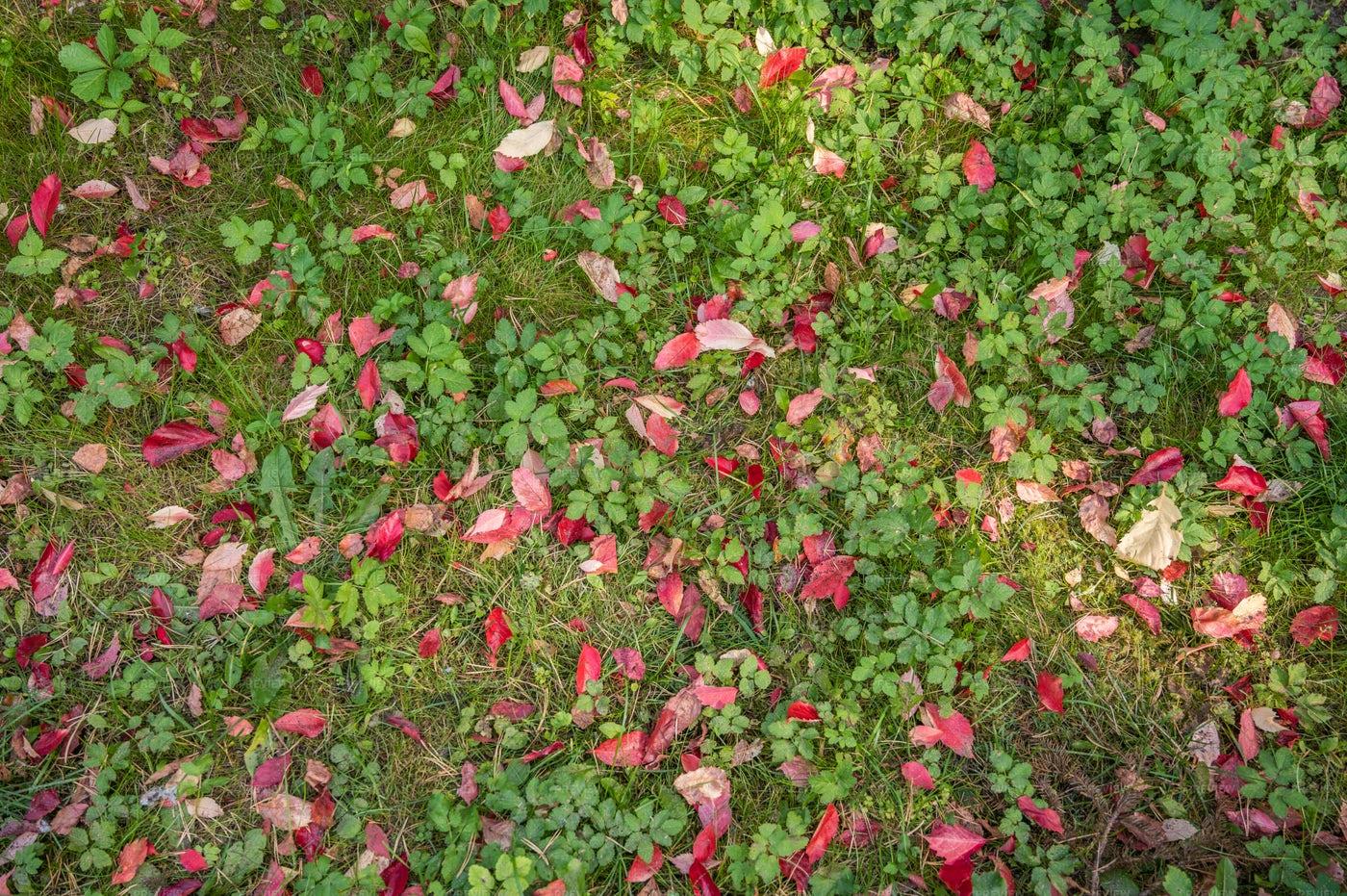 Glade With Green Grass: Stock Photos