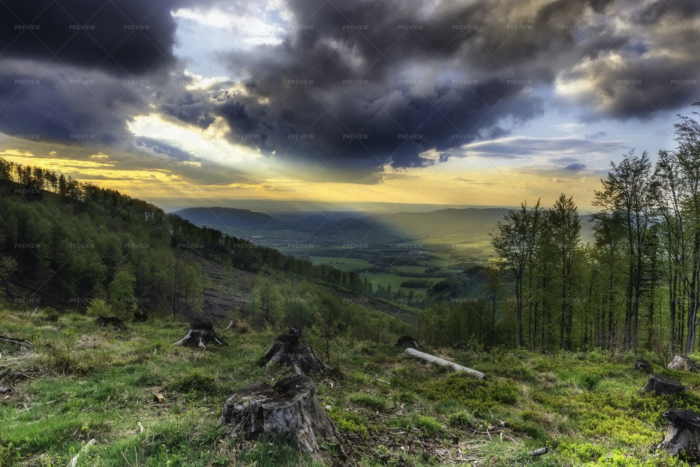 Foothill Spring Landscape: Stock Photos