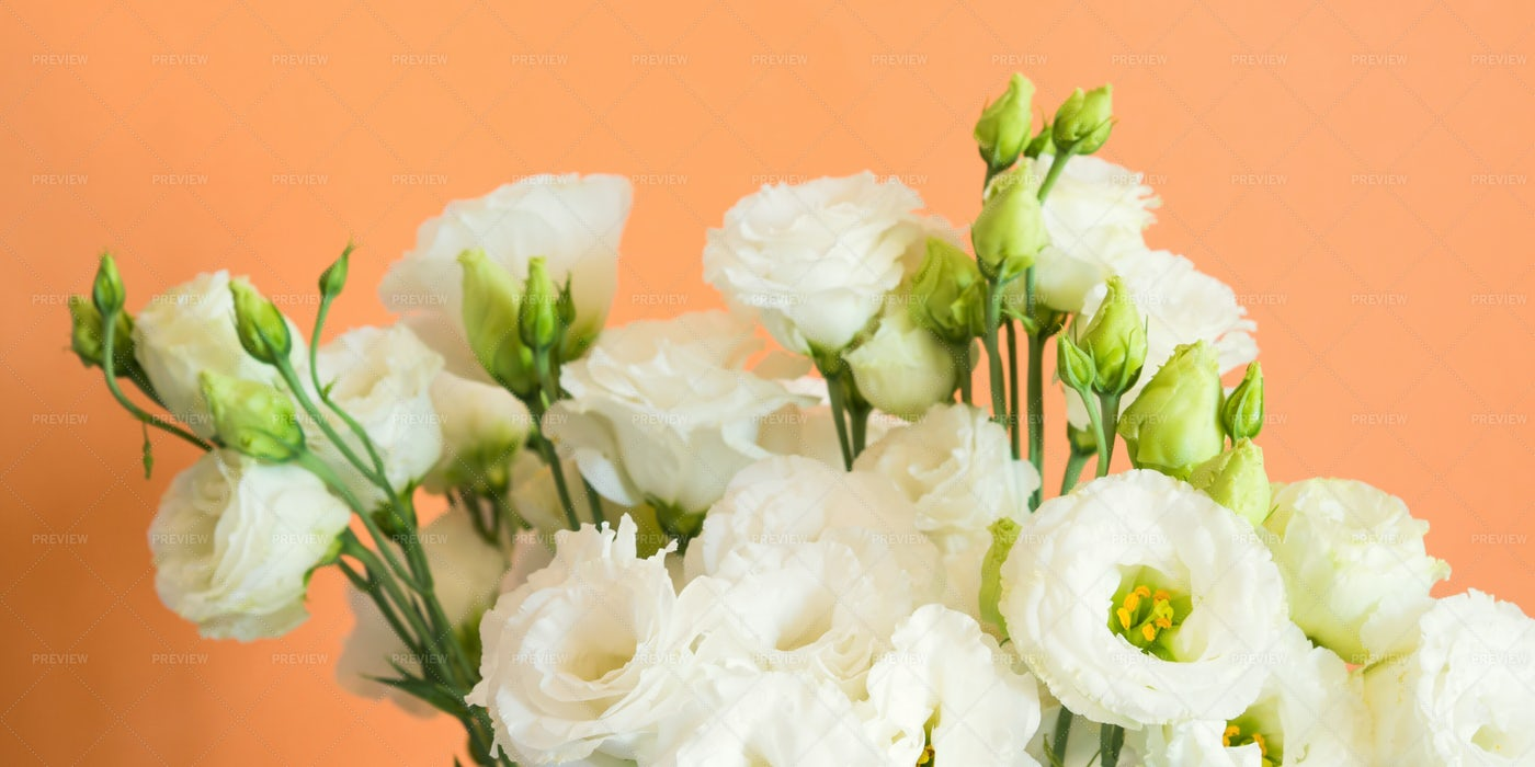 White Flower Bouquet: Stock Photos