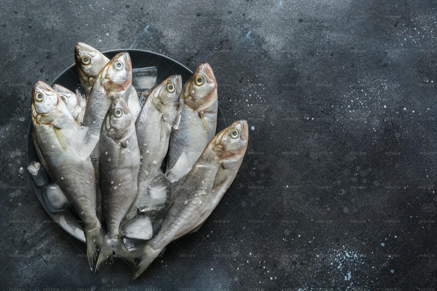 Bluefish On Ice: Stock Photos