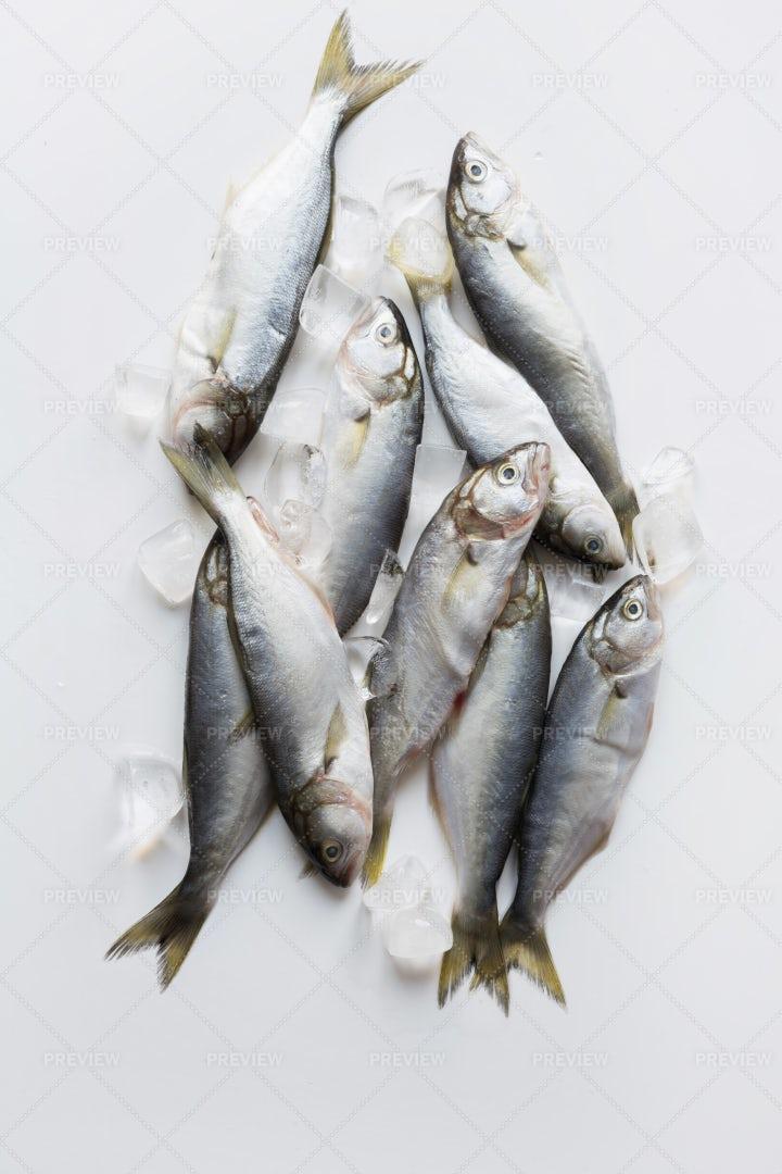 Bluefish With Ice Cubes: Stock Photos