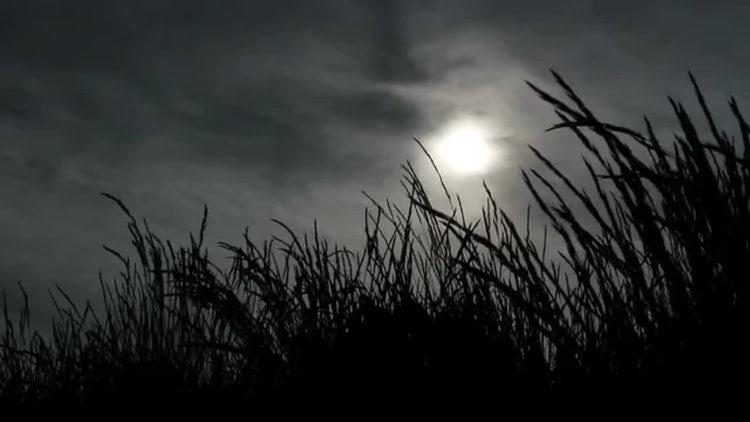 Dark Grass Silhouettes: Stock Video