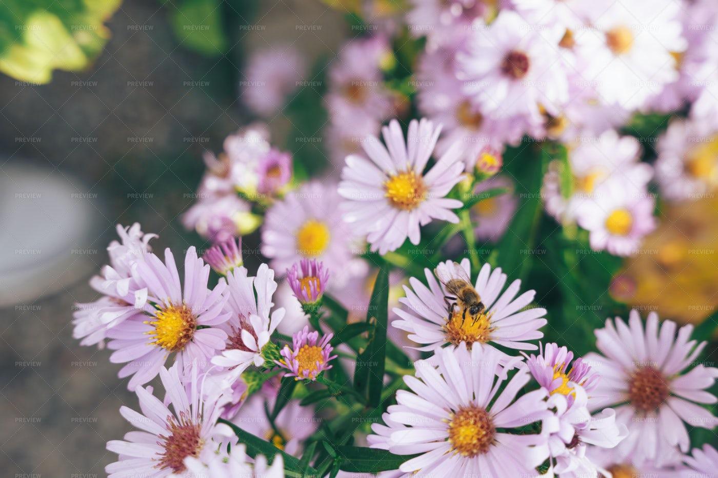 Bee On Beautiful Flowers: Stock Photos