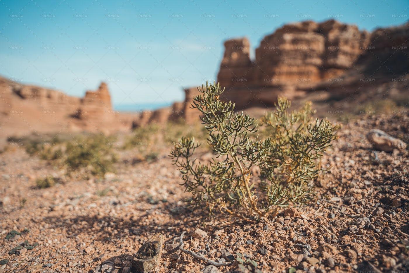Desert Plants: Stock Photos