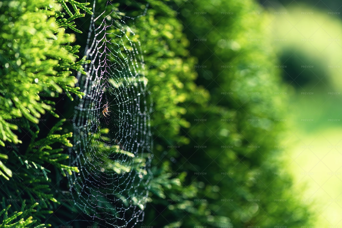 Spider Web In Nature: Stock Photos