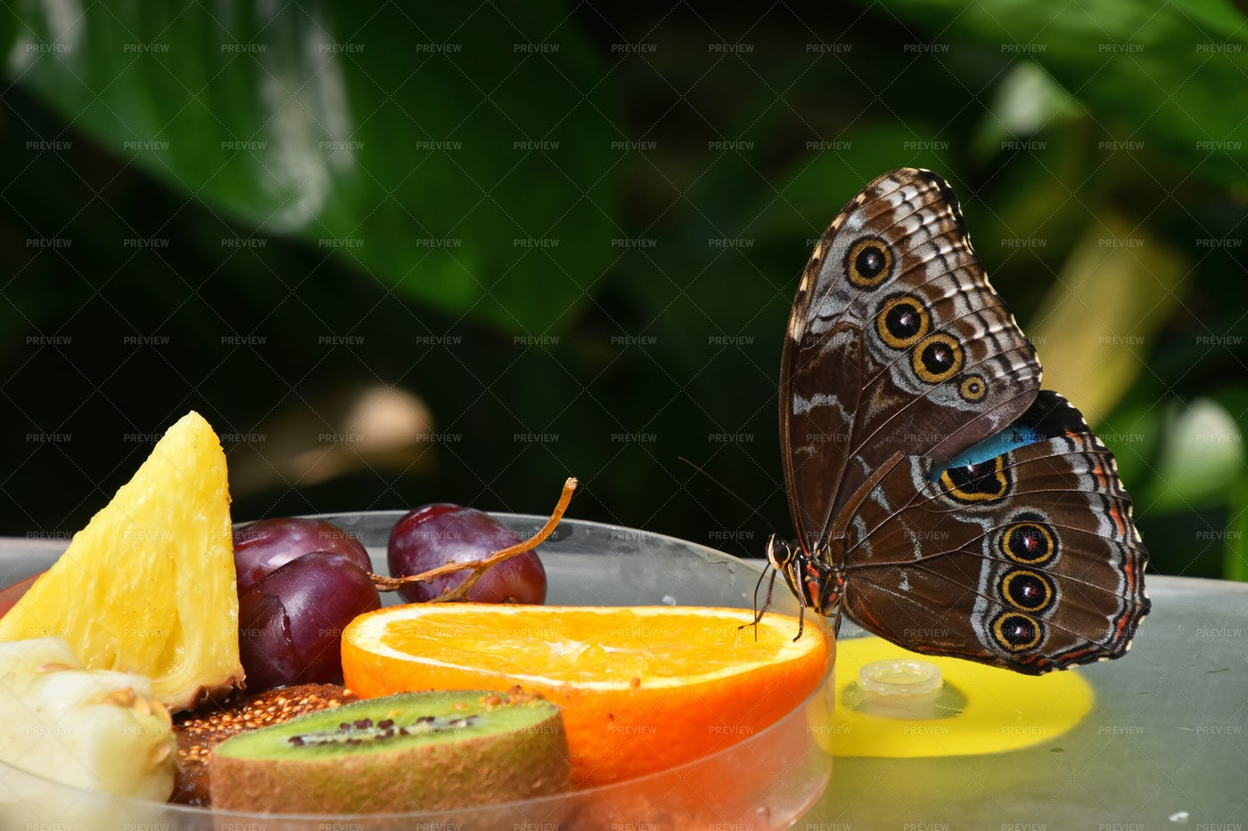 Butterfly Eating Fruits: Stock Photos