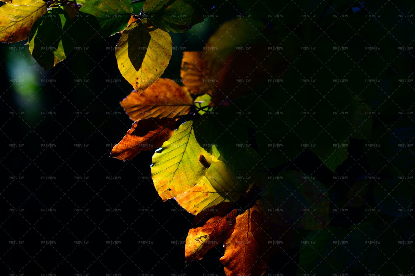 Colored Autumn Leaves: Stock Photos
