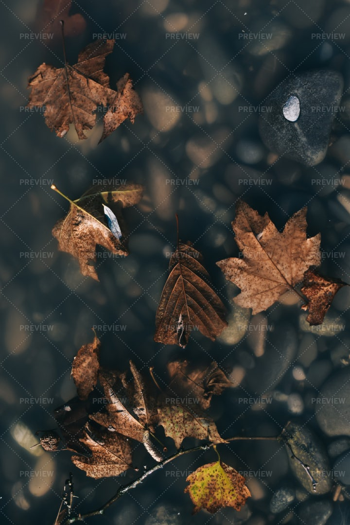 Leaves On Water Surface: Stock Photos