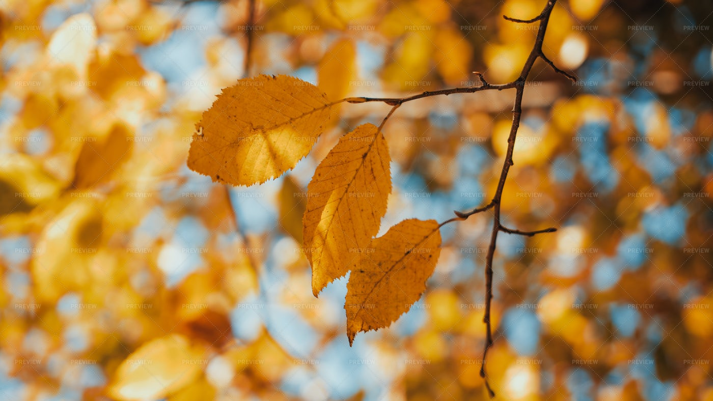 Fall Colors: Stock Photos