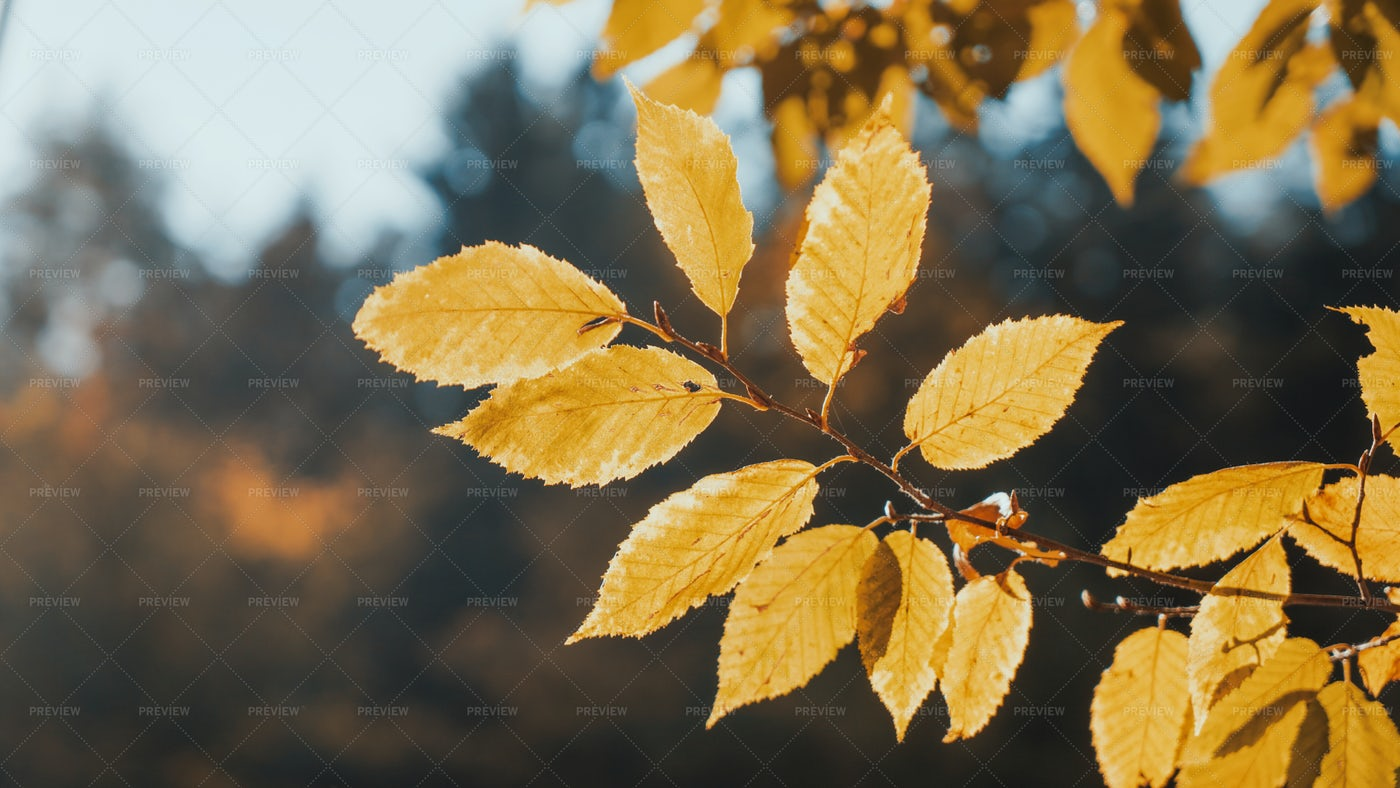 Bright Autumn Leaves: Stock Photos