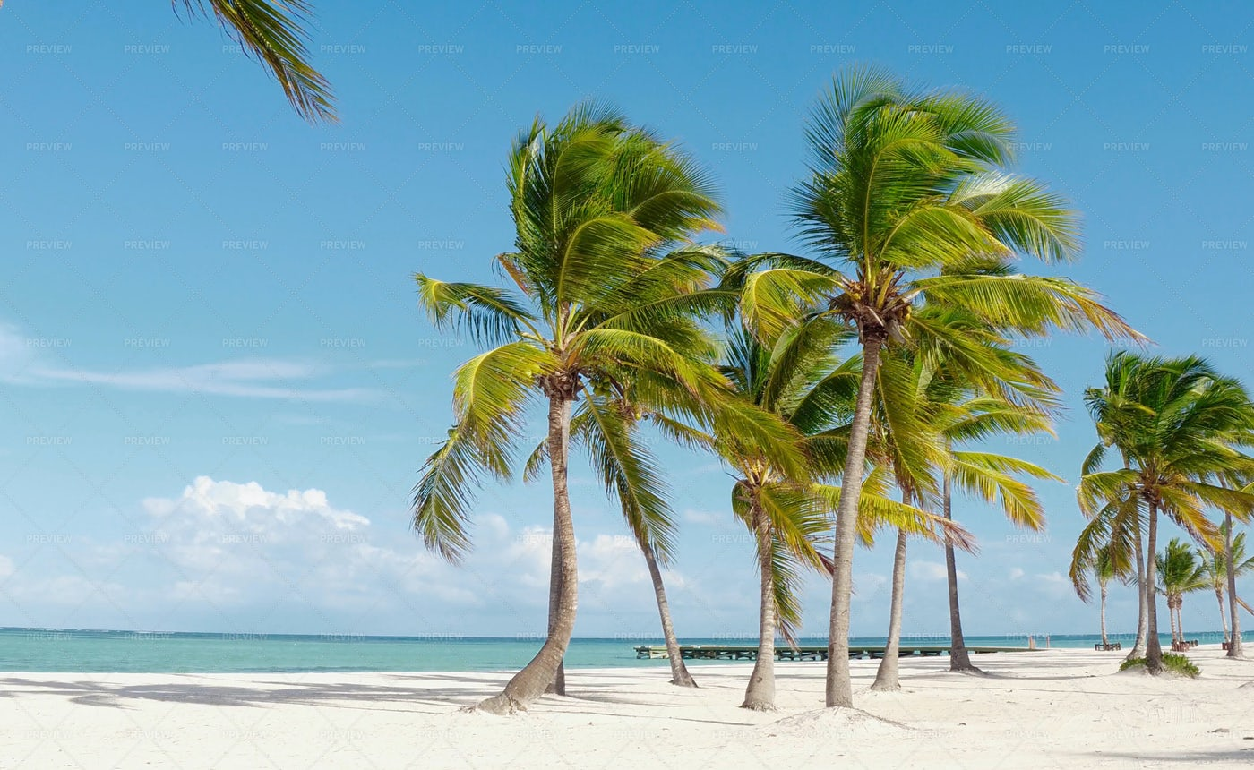 Hawaii Palm Beach Landscape: Stock Photos