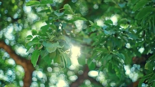 Sunlight Streaming Through Leaves : Stock Video