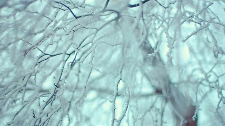 Frozen Branches On Clear Bright Sky: Stock Video