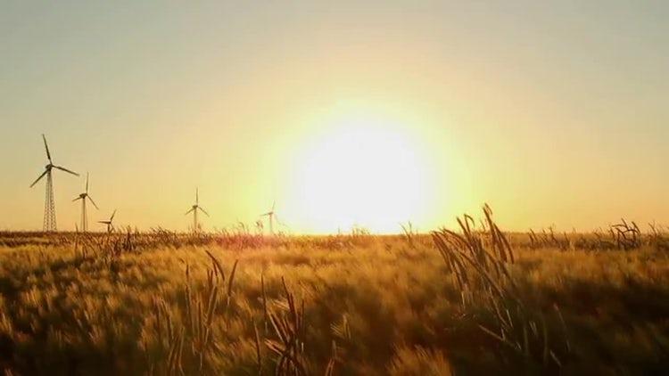 Grain Fields In The Sun: Stock Video