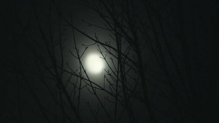 Full Moon On Windy Night: Stock Video