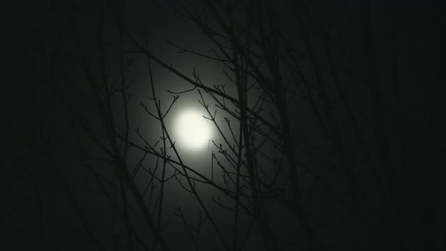 Full Moon On Windy Night: Stock Video