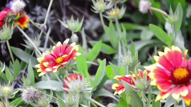 Flowers In The Wind: Stock Video