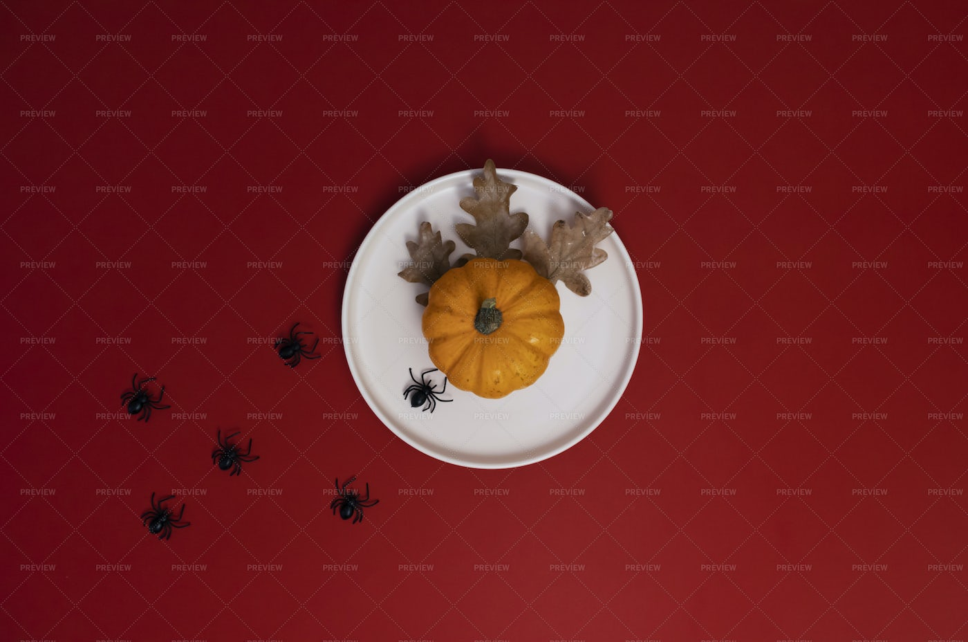 Plate With Small Pumpkin: Stock Photos