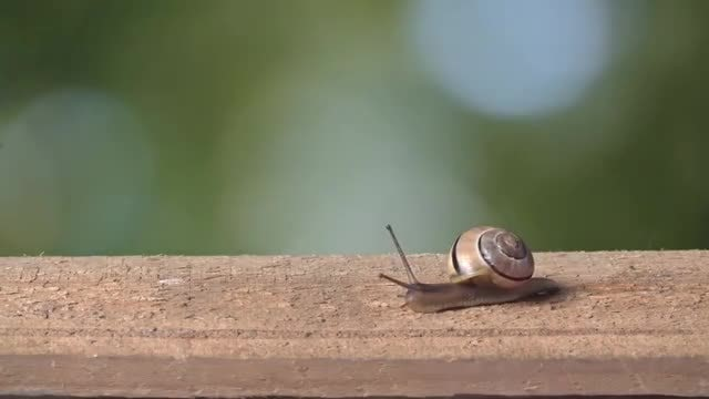 Medium Shot of Colored Snail: Stock Video