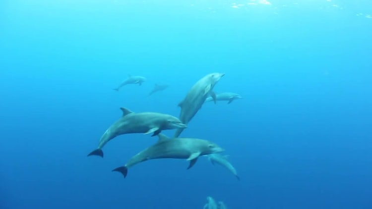 Swimming Dolphins: Stock Video